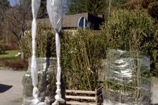 Leverans av växter. Stora häckplantor 160 cm hög