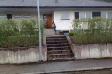Nyplanterad ligusterhäck sedd från gatan